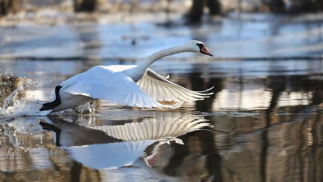 Ochrona przyrody – wyniki konkursu
